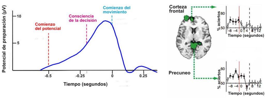 A la izquierda vemos la evolución del potencial de preparación en el tiempo. El comienzo del potencial ocurre aproximadamente medio segundo antes de la consciencia de la decisión. A la derecha tenemos la predicción (% de aciertos) del movimiento en base a datos de fMRI de la corteza cerebral y del precuneo. 8 segundos antes de la consciencia de la decisión se puede predecir la misma con una precisión más alta que el azar.