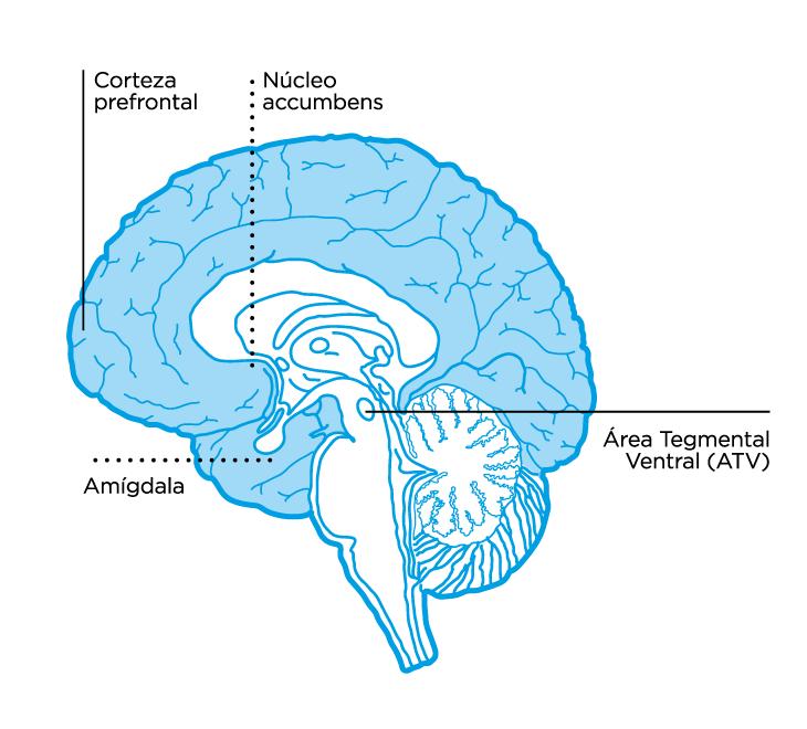 Cara interna de la porción superior del Sistema Nervioso Central