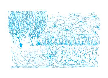 Estructura de los centros nerviosos de las aves (Ramón y Cajal, Madrid, 1905).