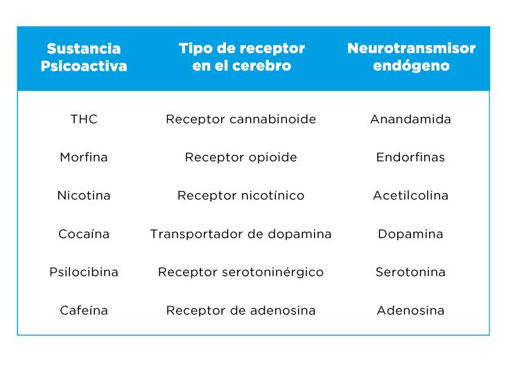 Cuadro de receptores de drogas psicoactivas en el cerebro