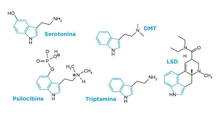 Estructuras quimicas de las moleculas: Serotonina, DMT, Psilocibina, Triptamina y LSD y sus similitudes