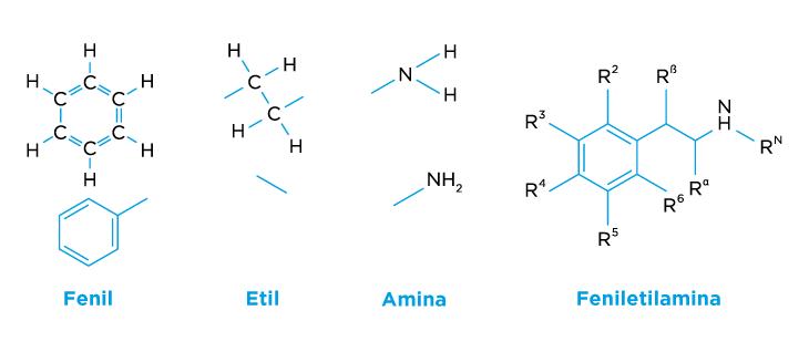 Molécula de feniletilamina. Y los grupos funcionales que la conforman