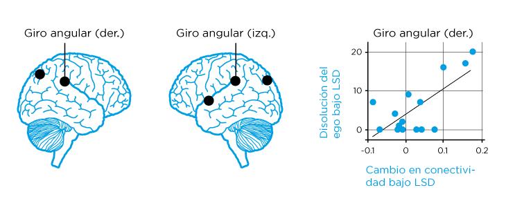 Conectividad de la corteza parietal, en la zona conocida como giro angular, bajo los efectos del LSD