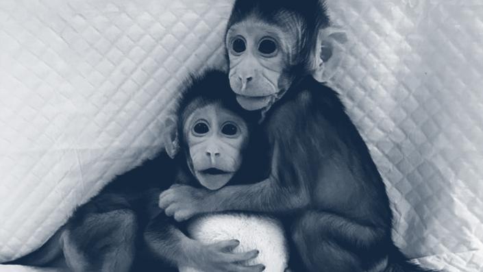 Monos clonos