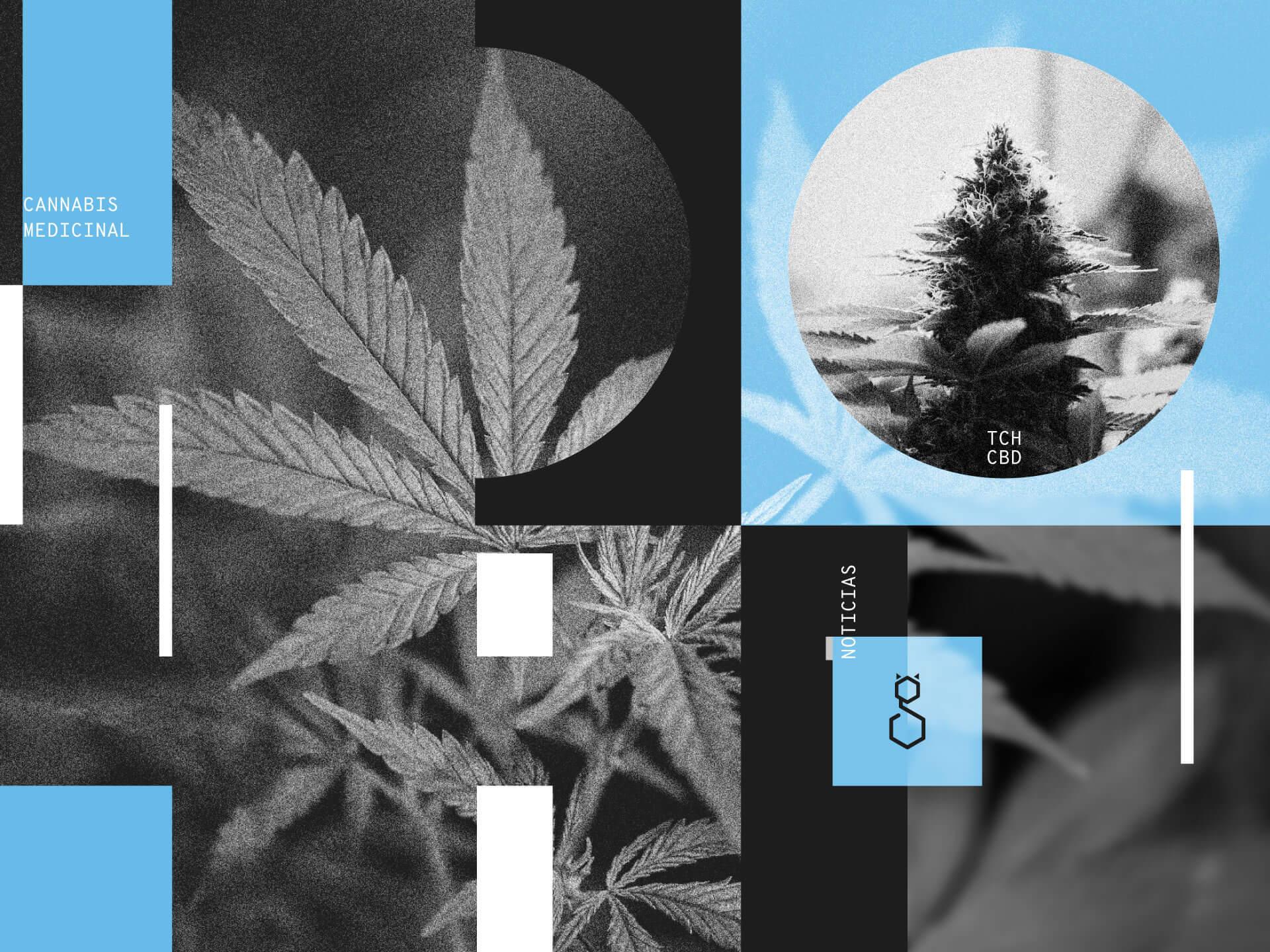 Cannabis industria nacional